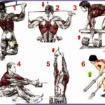 4  Bodybuilding Exercises Pictures Training