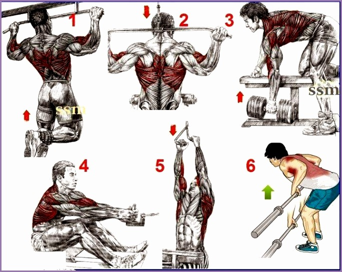 This a simple exercises for the begining s bodybuilding CHEST PROGRAM SHOULDERS PROGRAM SHOULDERS