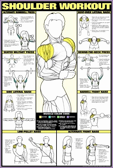 8396a640ccb55fab6957bf10c4ba1c47 gym back workout traps workout