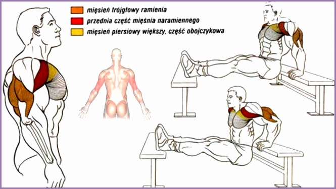 Triceps Dip Exercise Healthy Fitness Workout Training Plan Arm