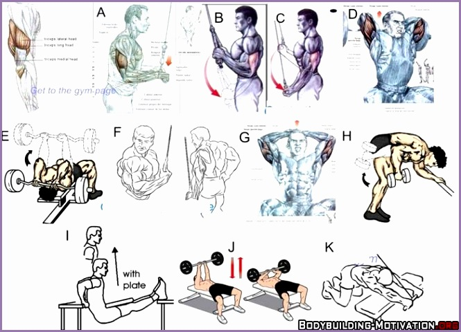 bodybuilding exercises pictures and names pdf