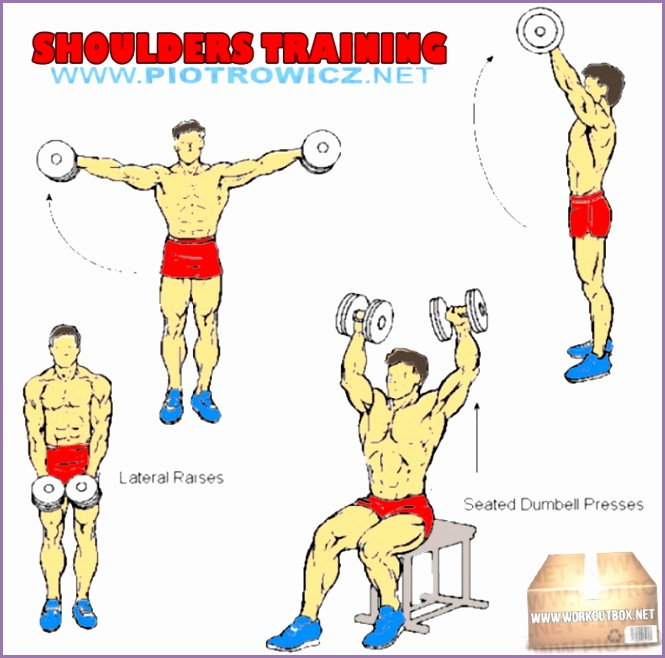 Shoulders Training Hardcore Arm Exercises And Workout Routines PROJECT NEXT Bodybuilding & Fitness
