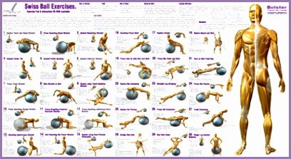 Exercise Ball Workout Chart