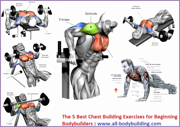 The 5 Best Chest Building Exercises for Beginning Bodybuilders