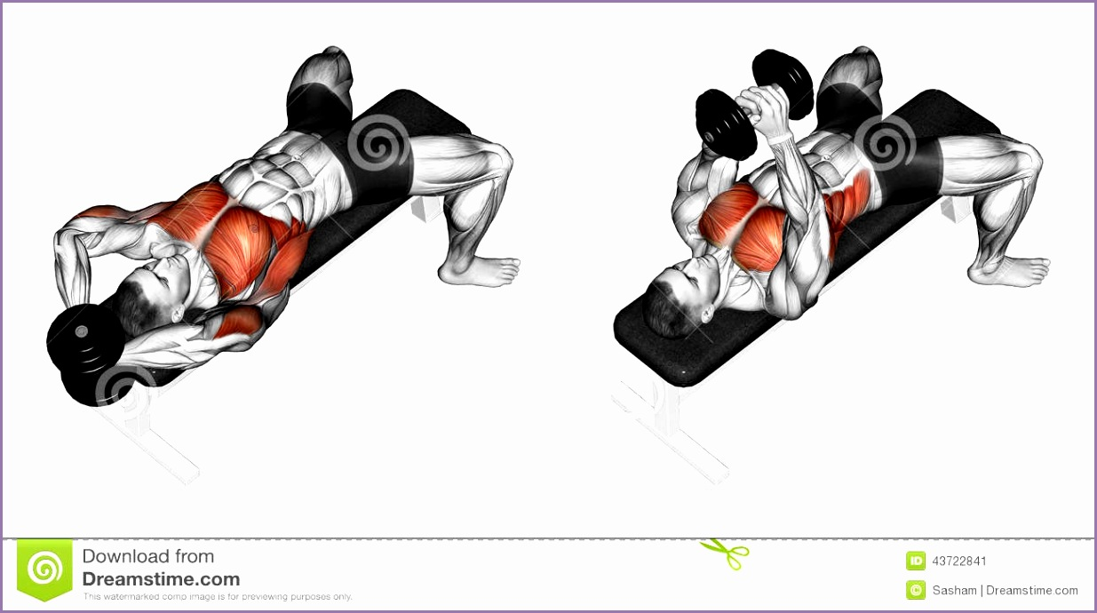 exercising link dumbbells behind head bodybuilding tar muscles marked red initial final steps