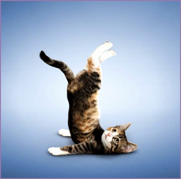 animal yoga poses 19 pics