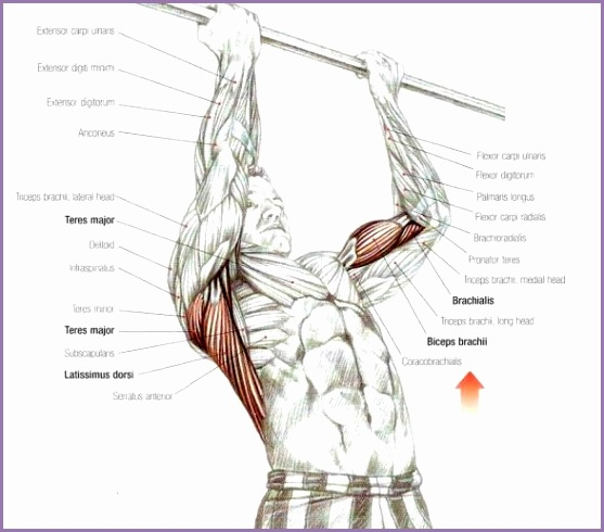 build bigger lats latissimus dorsi workout