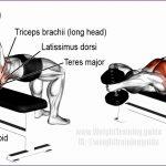 5 Latissimus Dorsi Workouts