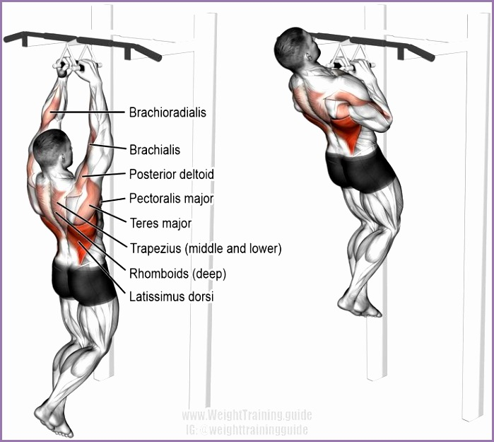 back exercises
