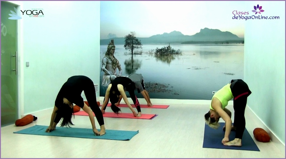 clases de yoga online 5 hatha yoga free style