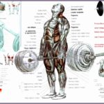 8 Body Building Exercise